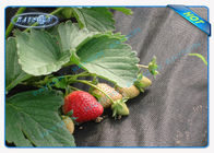 China Black Permeable Non Woven Landscape Fabric For Ground Control / Strawberry factory
