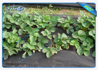 Light weight sunshine protective anti - grass garden weed barrier fabric for strawberry field